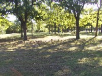 shaded grassy area of doyle park